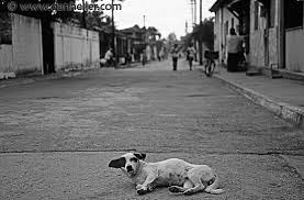 dog on road