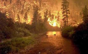 fire forest