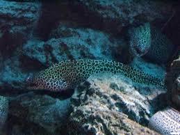 eels in the ocean