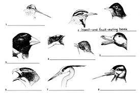 adaptation of birds