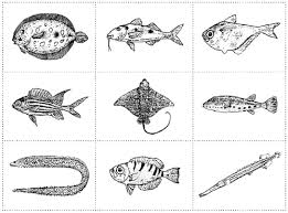 fish categories