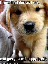 cutest puppy picture