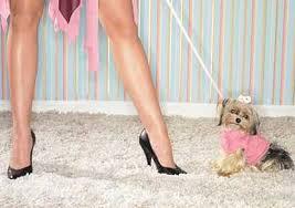dog cloths