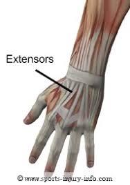 hands muscles