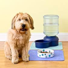 dog water dish
