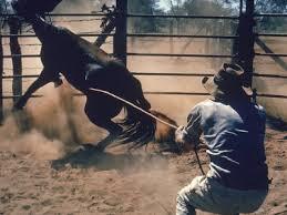 breaking horse