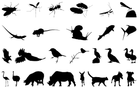 free animal outlines