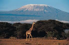 picture of mt kilimanjaro