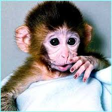 pics of cute monkeys