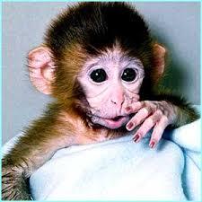 new born monkeys
