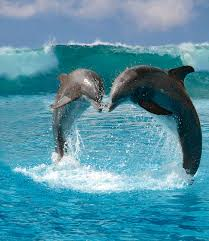 pictures about dolphins
