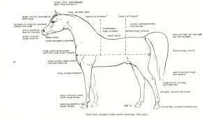 equine conformation