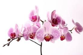 flowers greetings cards