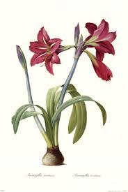 flor de lis significado