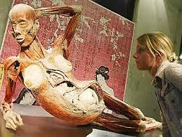 body museum