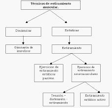 reflejo miotatico