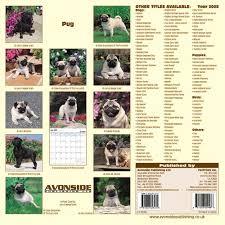 pug dog price