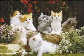 cute pictures of kittens
