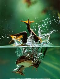 under water photos