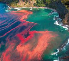 [FLOOD!] Sujet au plus grand nombre de pages - Page 30 Most-amazing-natural-phenomenon-red-tides