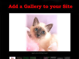 animal picture gallery