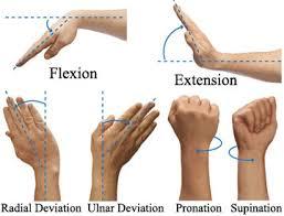 Entrenamiento en gimnasia artística II - Página 3 Wrist_and_hand_terms_copy