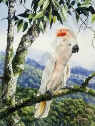 crested cockatoos