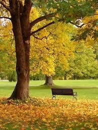 types of oak tree leaves