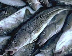 cod fish picture