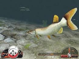 fisherman games