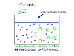 diffusion membranes