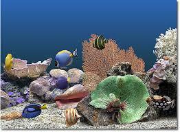 high definition aquarium