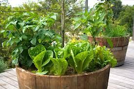 barrels garden