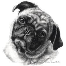 pencil sketches of dogs