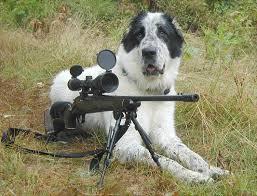 big game hunting dogs