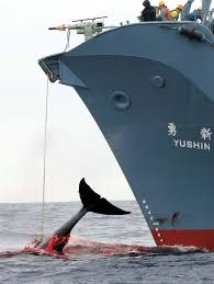 greenpeace whaling