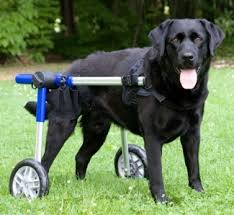 dog wheel