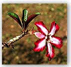 flower in france