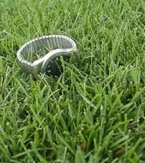 bluegrass lawns