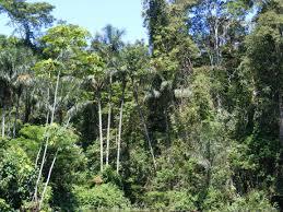 amazonian rainforest