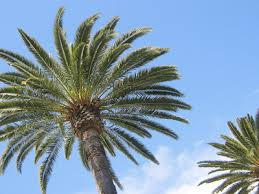 palmtree pictures