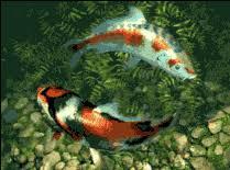 koi fish screensaver