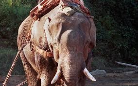 chinese elephants