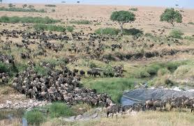masai mara pictures