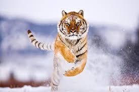 amazing wildlife pictures