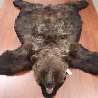 bear fur rug