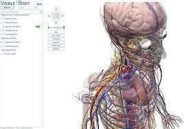 human physiology diagram