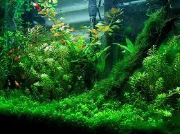 fish aquarium plants