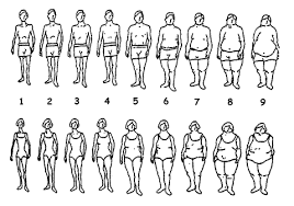 body shapes for women