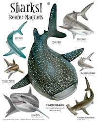 all about shark